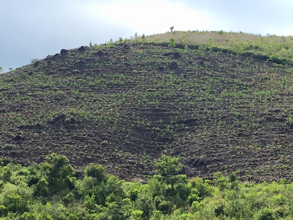 Siembra volcan.jpg