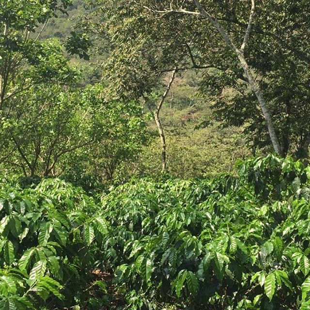 💚 #paisdelaeternaprimavera #nofilter #farmviews #sanluiselvolcancito