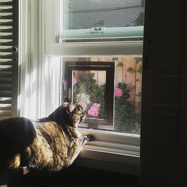 Just chillin in the sun smelling the flowers. #catsofinstagram