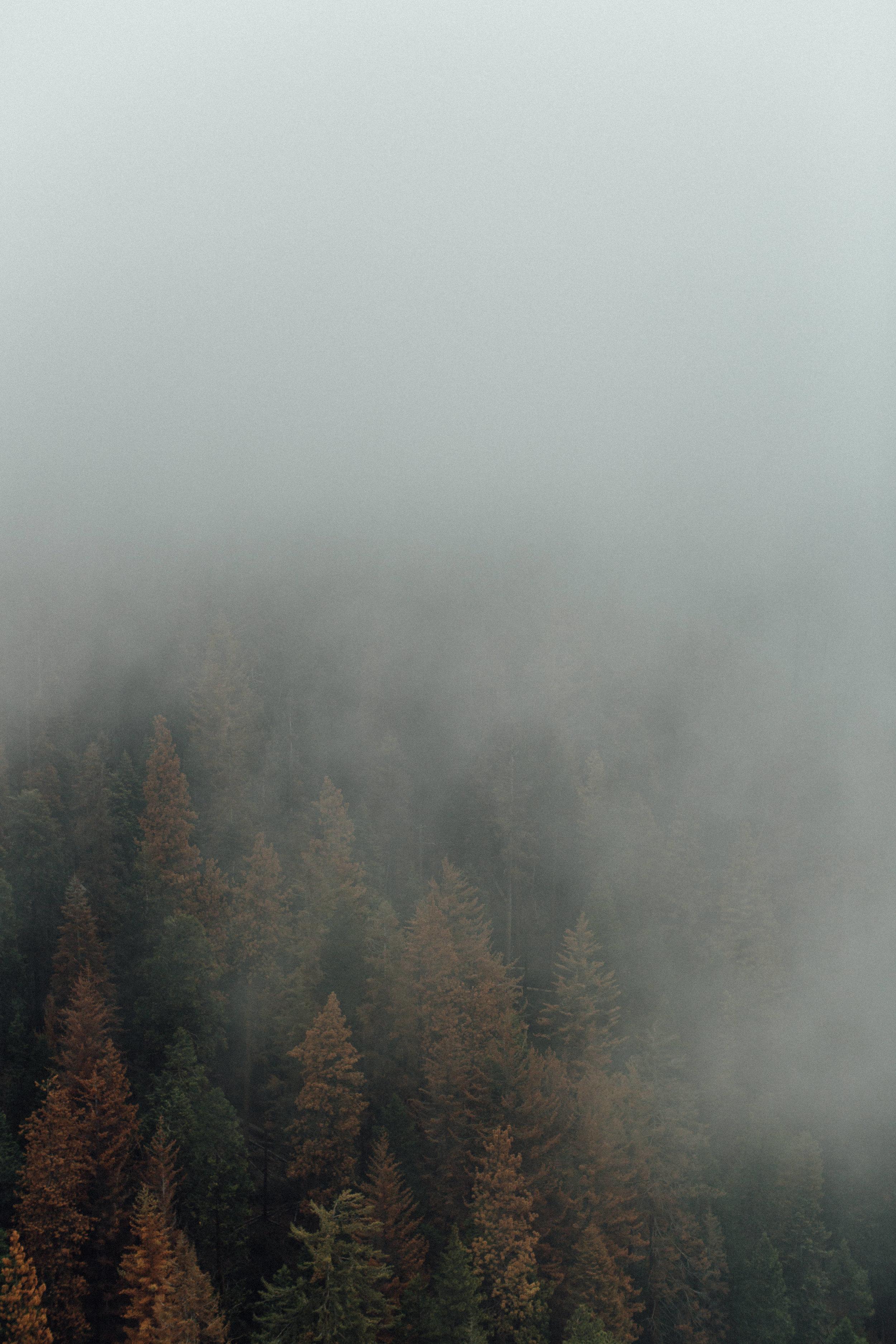 Sequoia-1-8.jpg