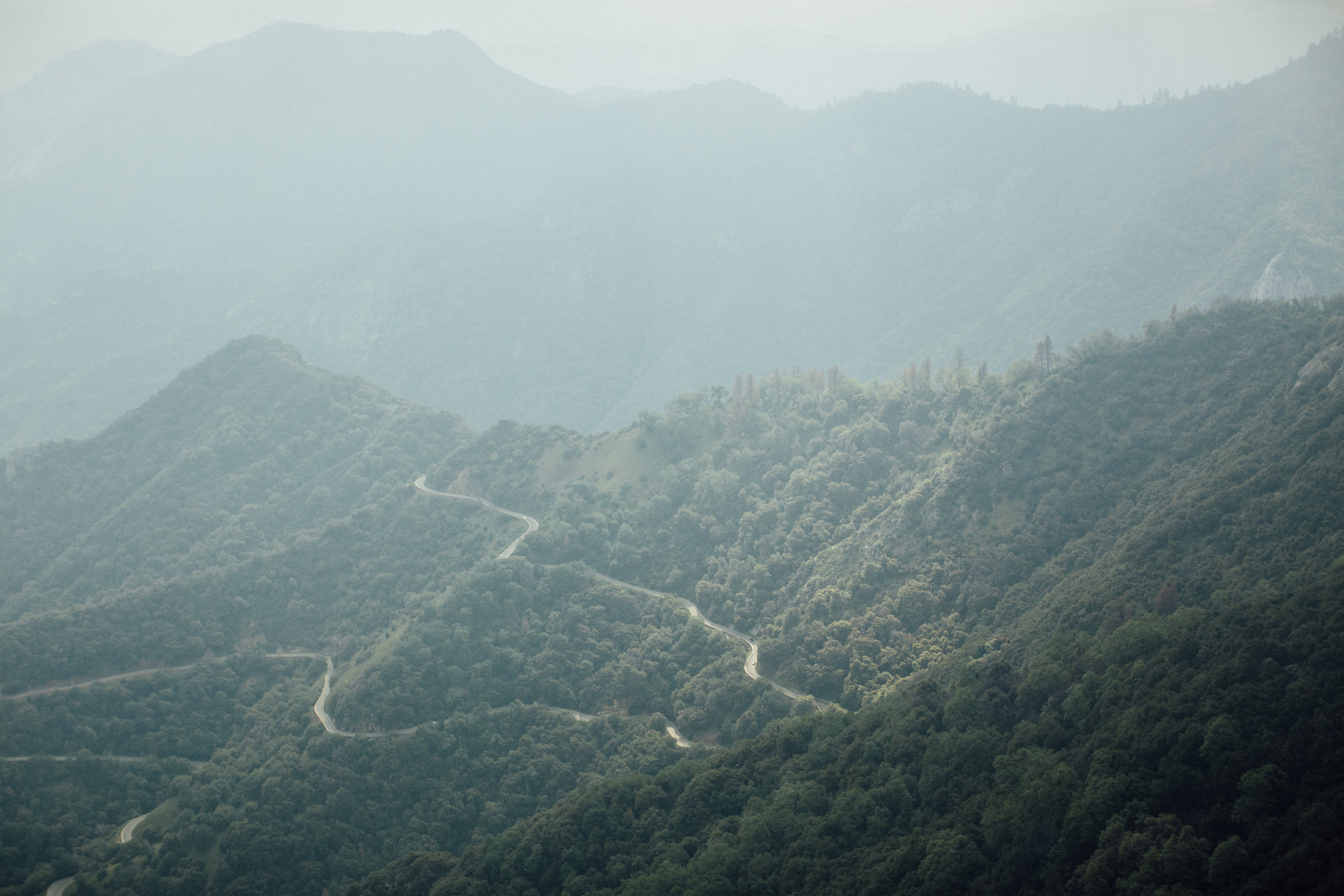 Sequoia-1-9.jpg