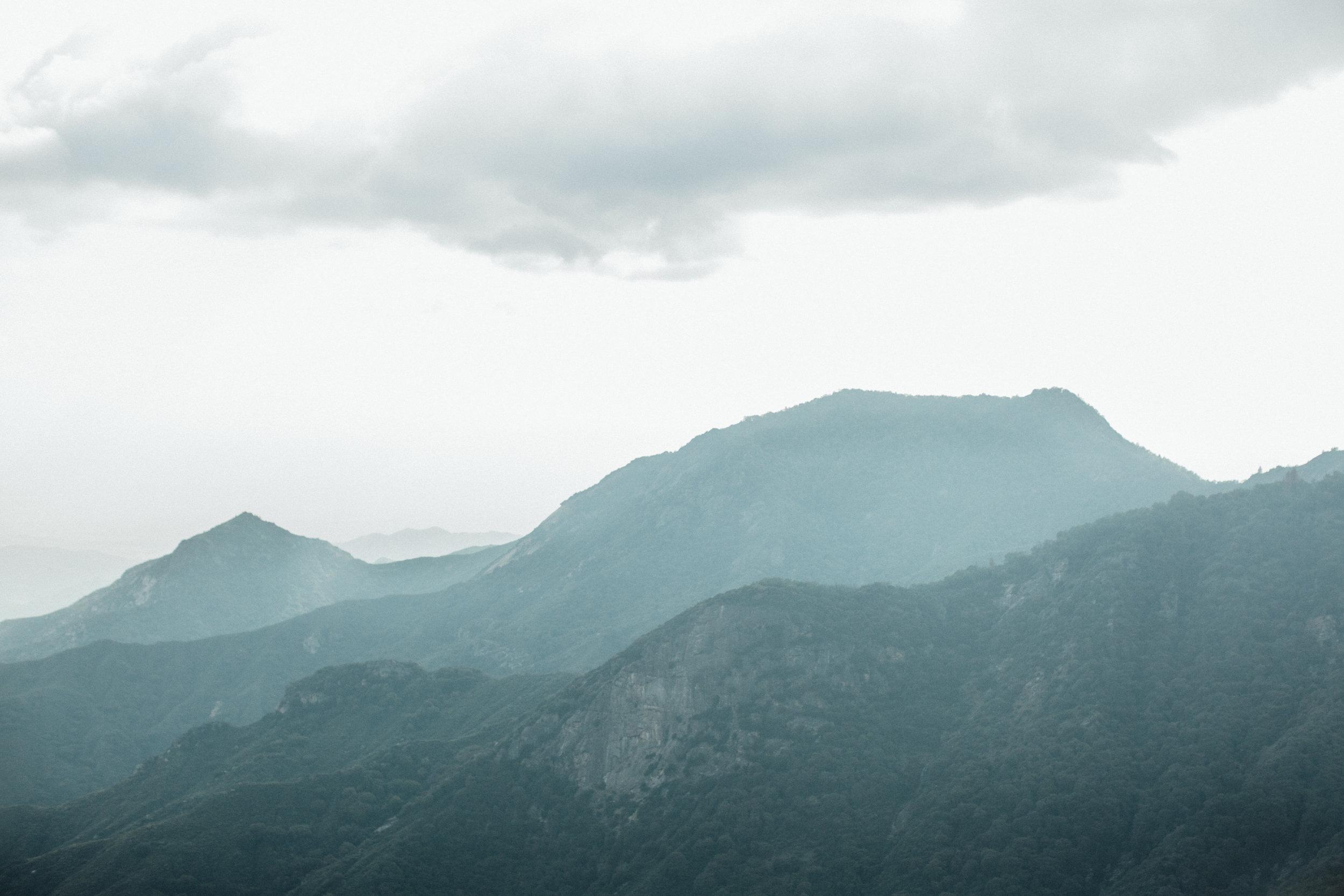 Sequoia-1-10.jpg