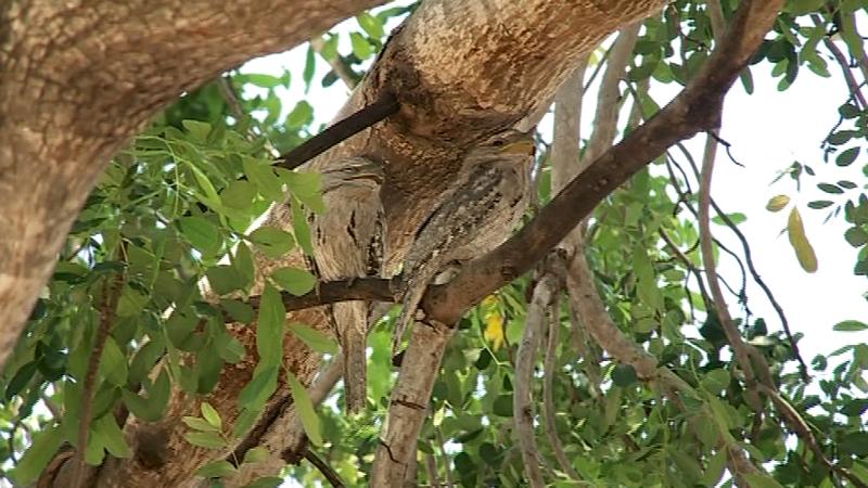 some amazing bird life around Timber Creek