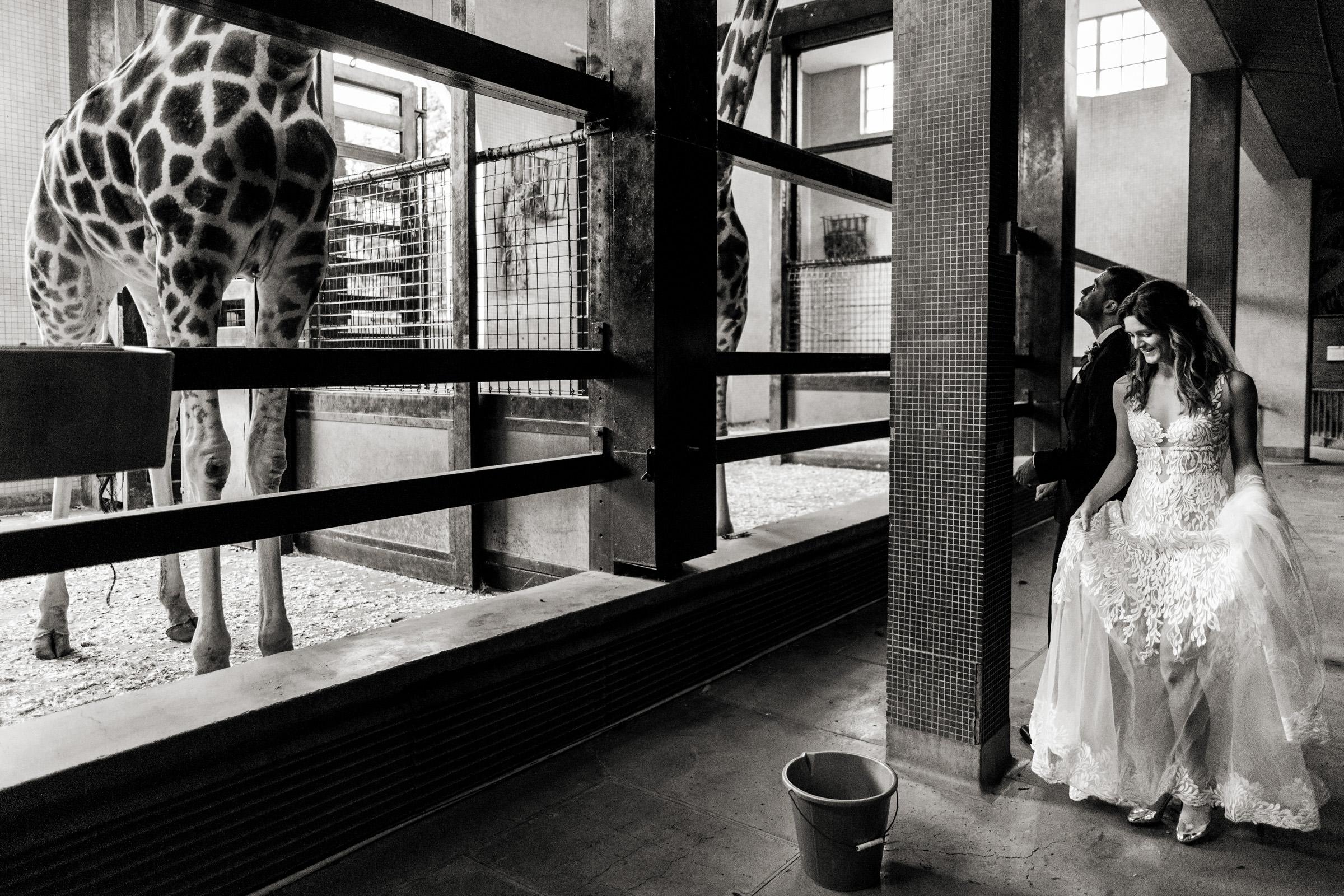 London Zoo Wedding Photography 025.jpg