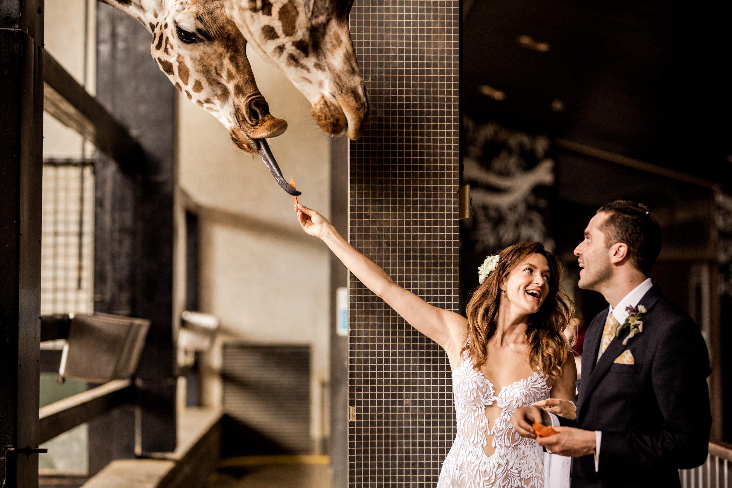 London Zoo Wedding Photography 026.jpg