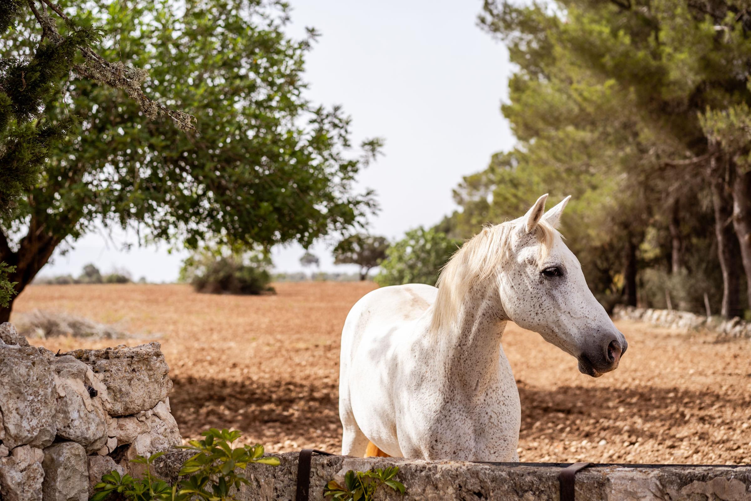 Mallorca - Son Mesquida Nou - horse