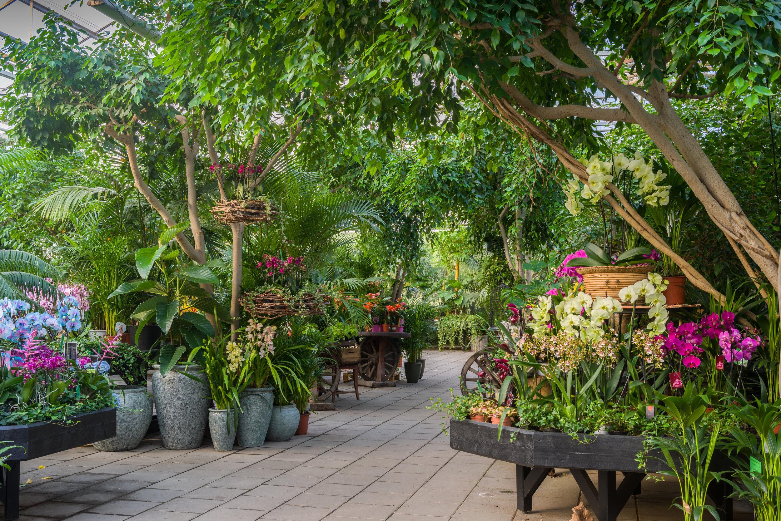 Åsbyhemochträdgård-miljöbild orkidéer.jpg