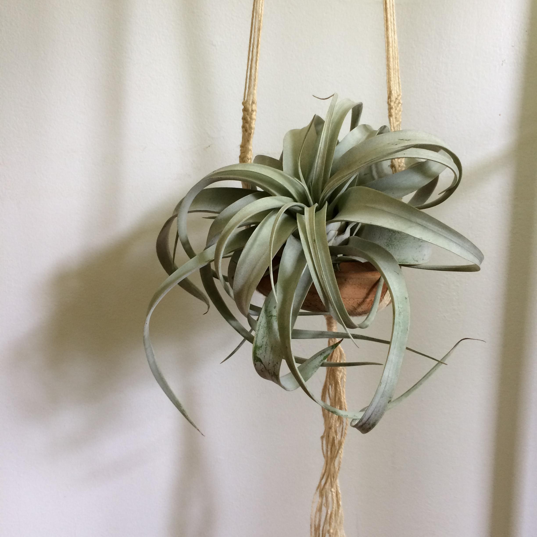 plant hanger macrame house sparrow nesting