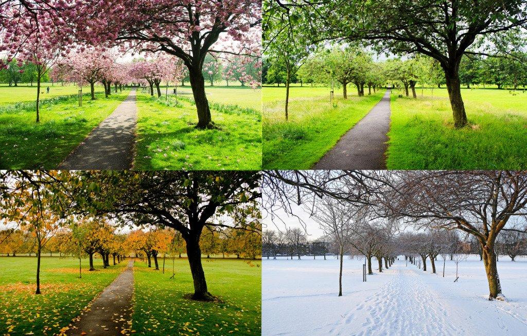 the-four-seasons2.jpg