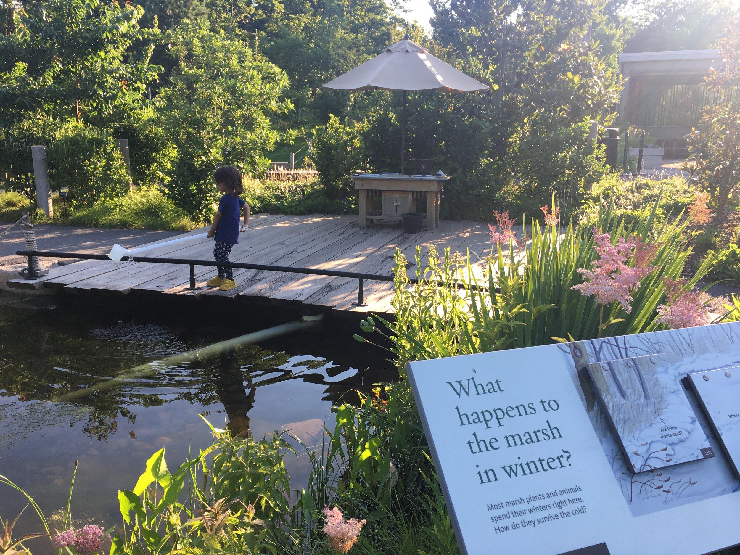 Brooklyn Botanical garden .jpg