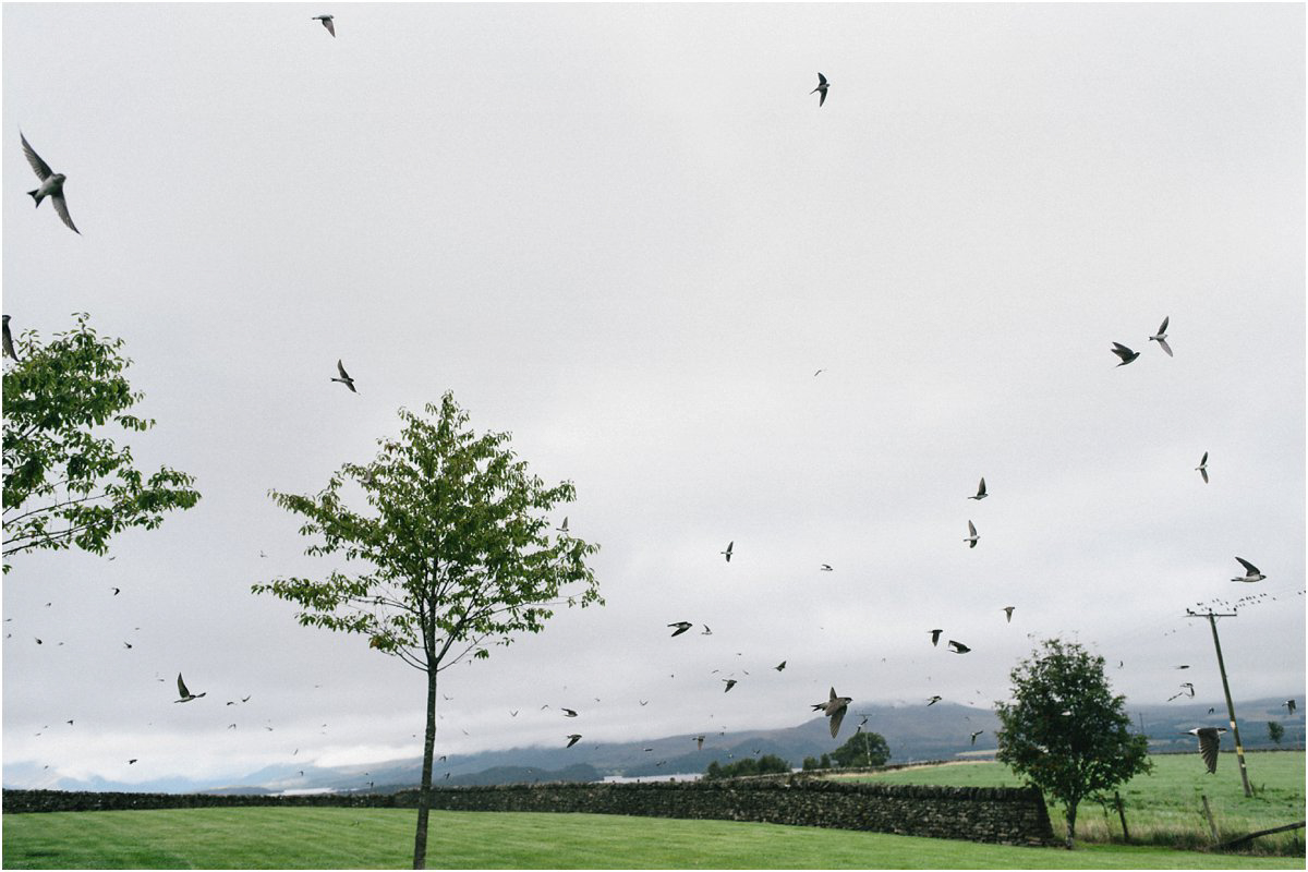 Swallows flying in swarms before a wedding in Ardoch House by Loch Lomond Scotland photographd by Cro and Kow