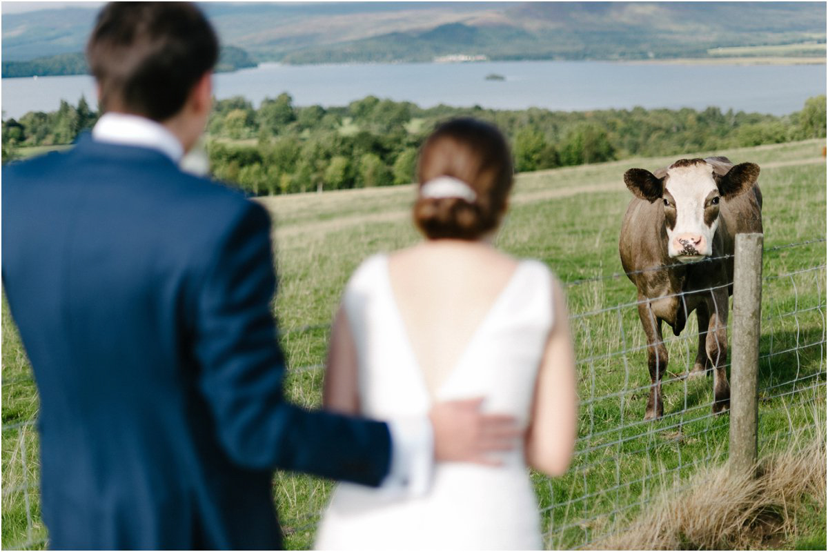 Wedding couple looking at a friendly cow after their outdoor wedding ceremony in a Scottish countryside