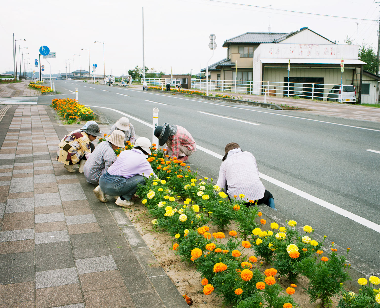 A group of women from a local senior-citizen group in Minamisoma, who also planted sunflowers throughout the region