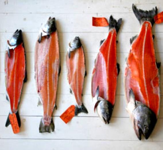 Know Yoru Salmon