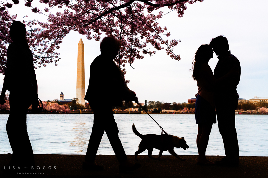 c&p_cherry_blossom_engagements_lisa_boggs_photography_13.jpg
