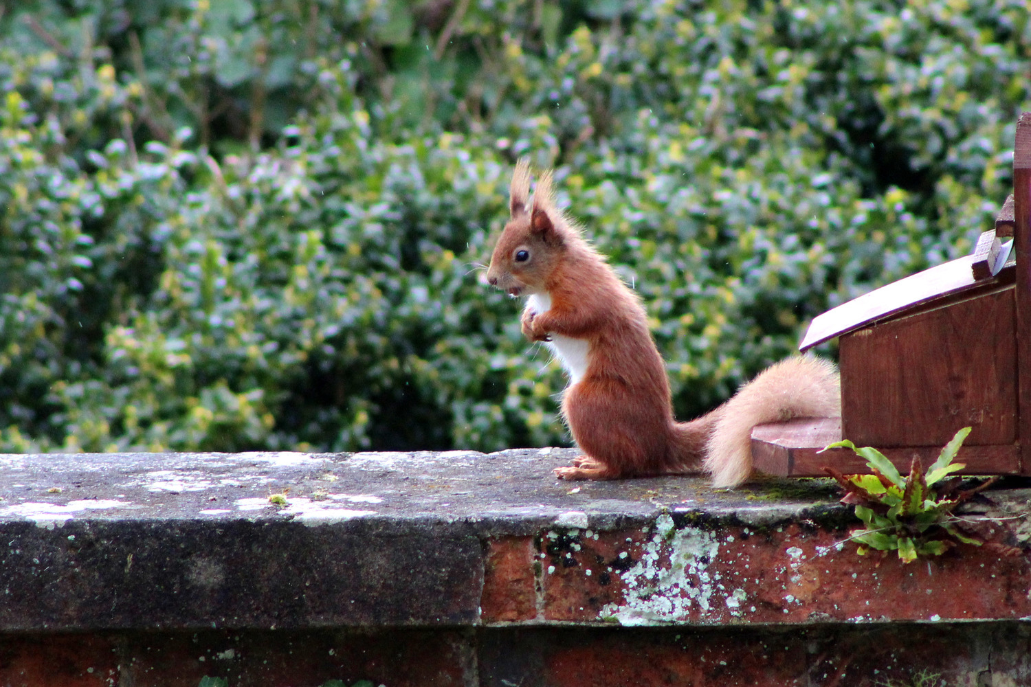 We often see a red squirrel or two in the garden. Bring your camera!