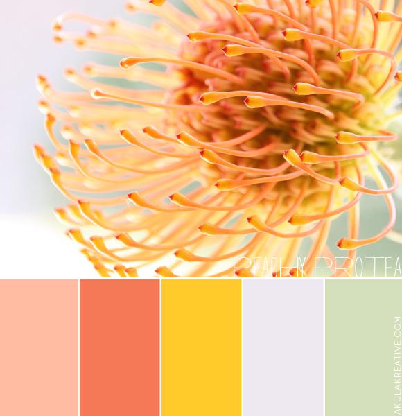 peachy_protea_color_palette