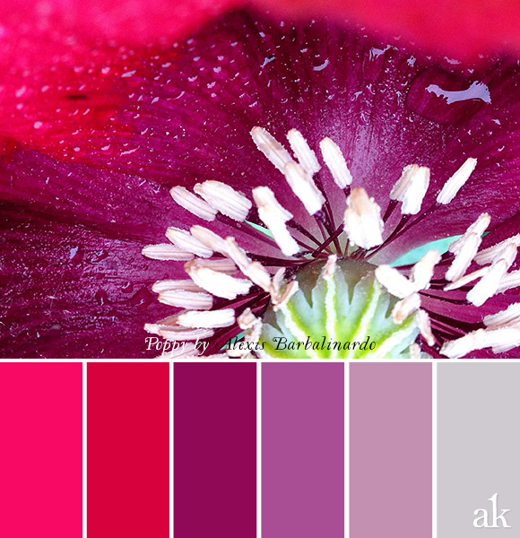 a poppy-inspired color palette // hot pink, purple, gray #poppy