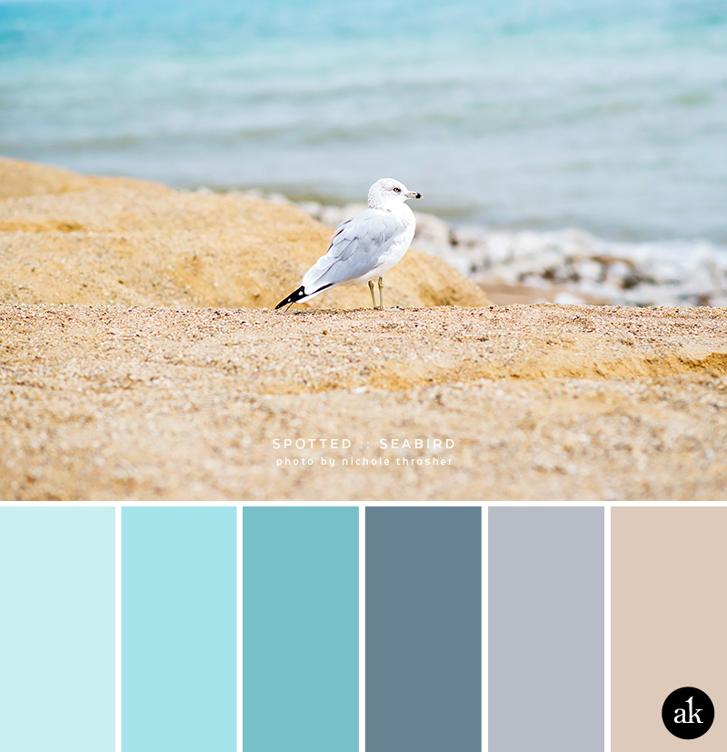 a seabird-inspired color palette
