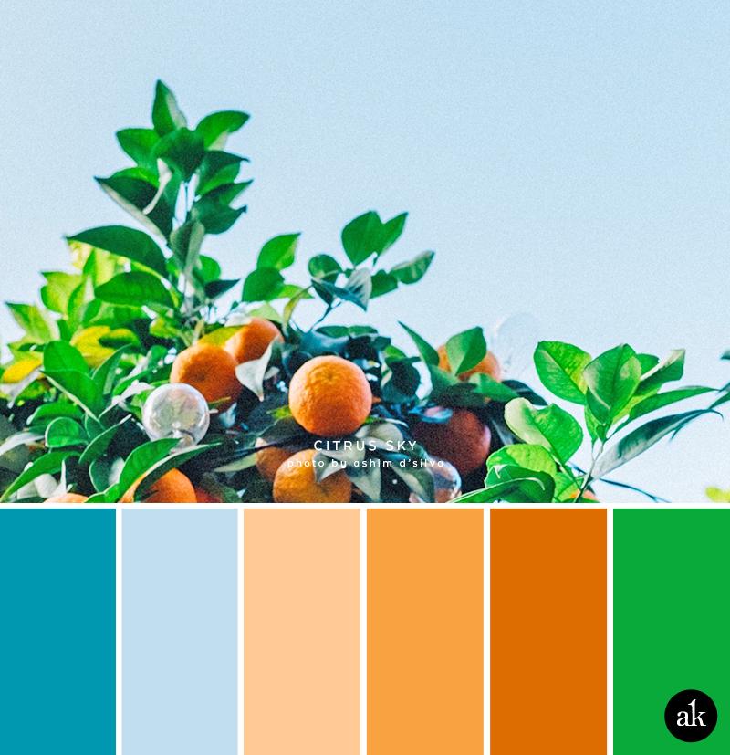 an orange-tree-inspired color palette // sky blue, orange, green