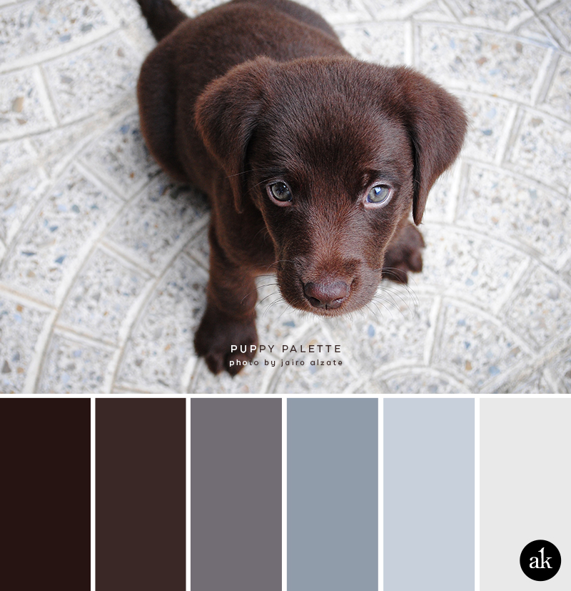 a puppy-inspired color palette // brown, gray, blue