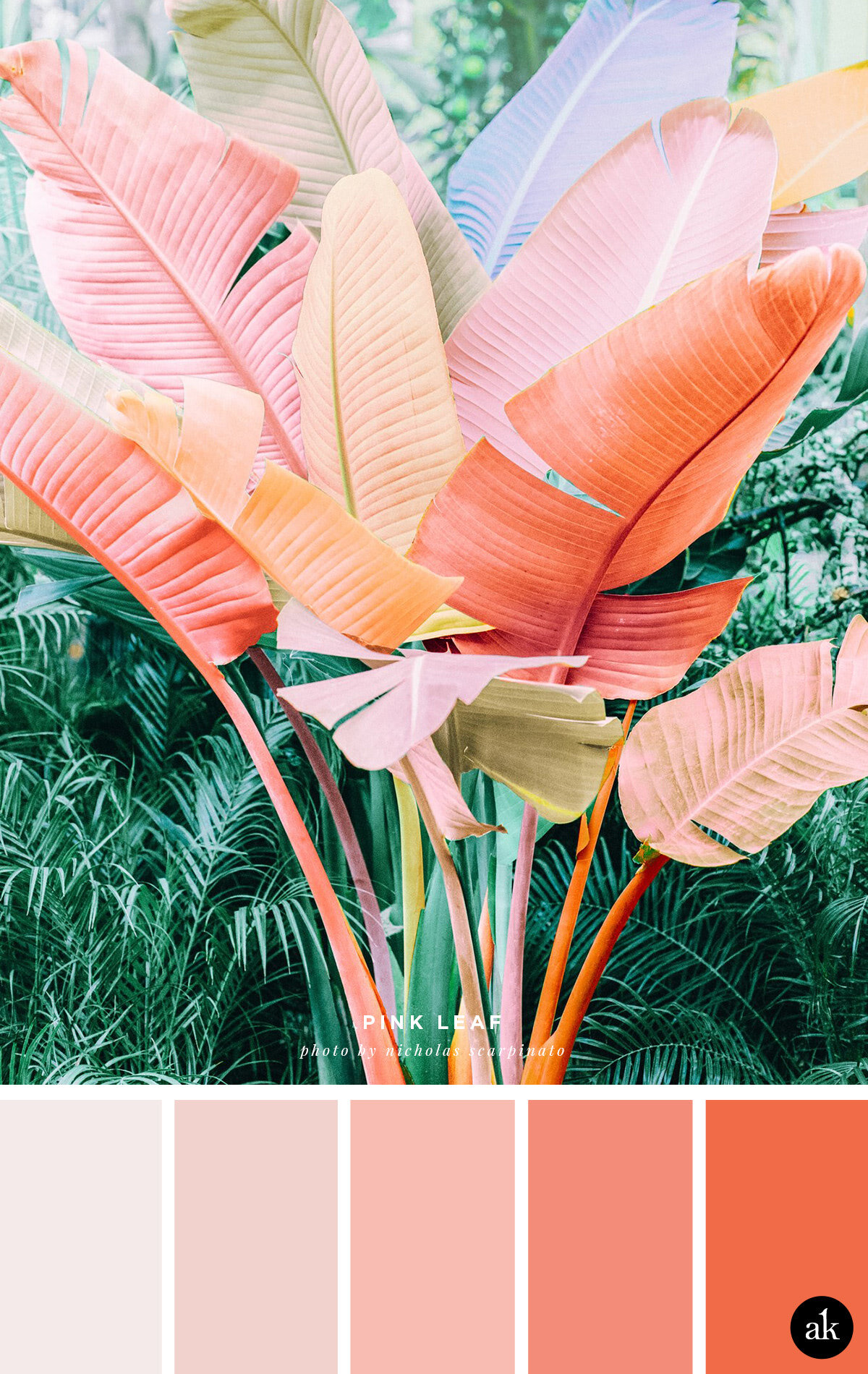 a pink-palm-inspired color palette // orange, coral, pink // photo by Nicholas Scarpinato