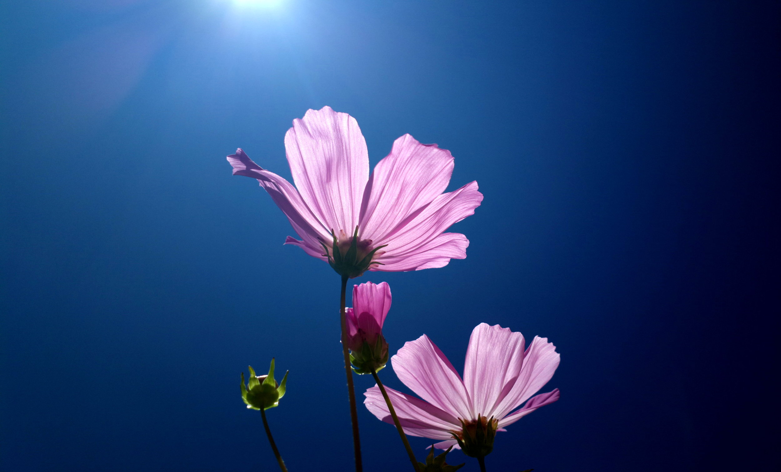 """Flower"" by Flickr User solarisgirl. CC BY-SA 2.0"