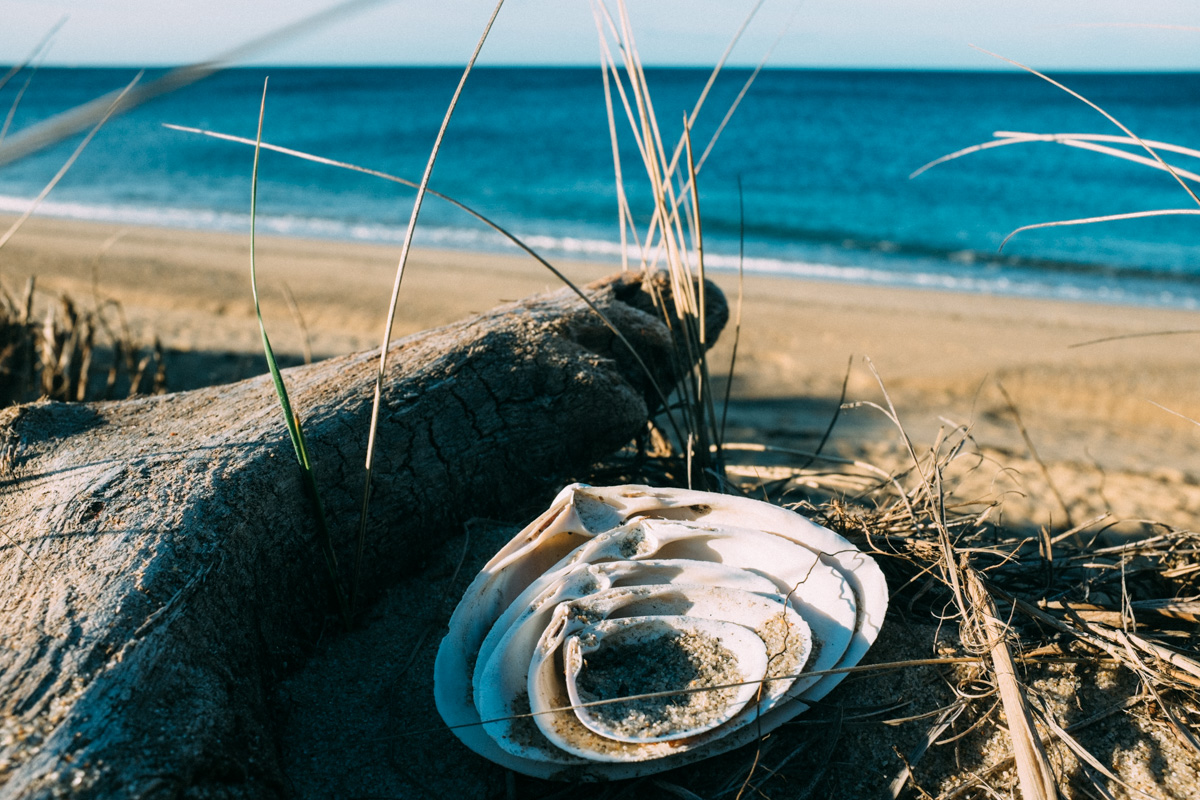 Seashells nesting on the Cape Code Seashore. September 2015.