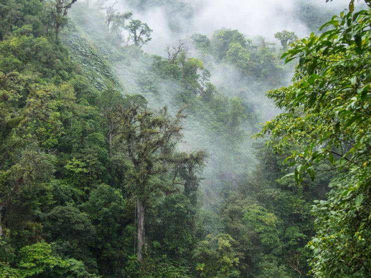 full-clouds-engulfing-monteverde-cloud-forest.jpg
