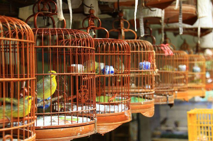 Yuen Po Bird Market, Kowloon