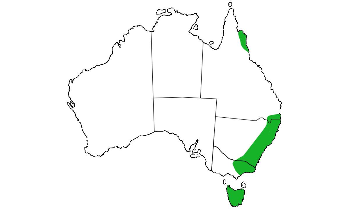 Dasyurus-maculatus-range.jpg