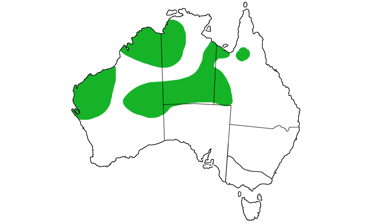 Geophaps-plumifera-range.jpg