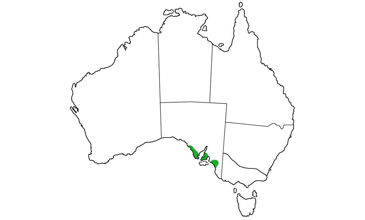 Notechis-ater-niger-range.jpg