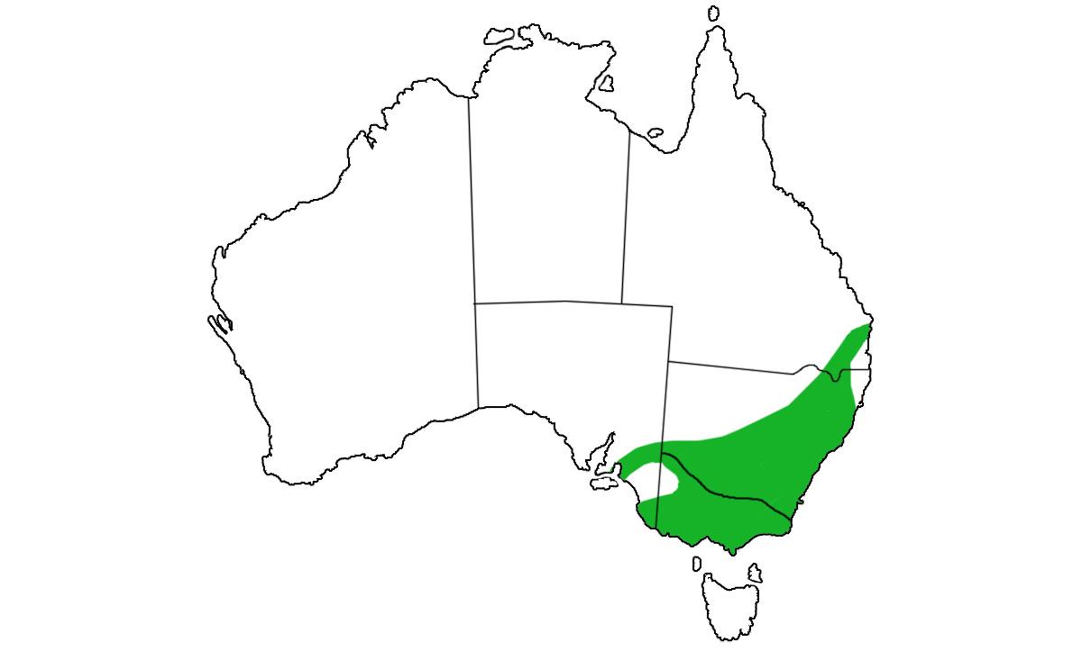 Notechis-scutatus-range.jpg
