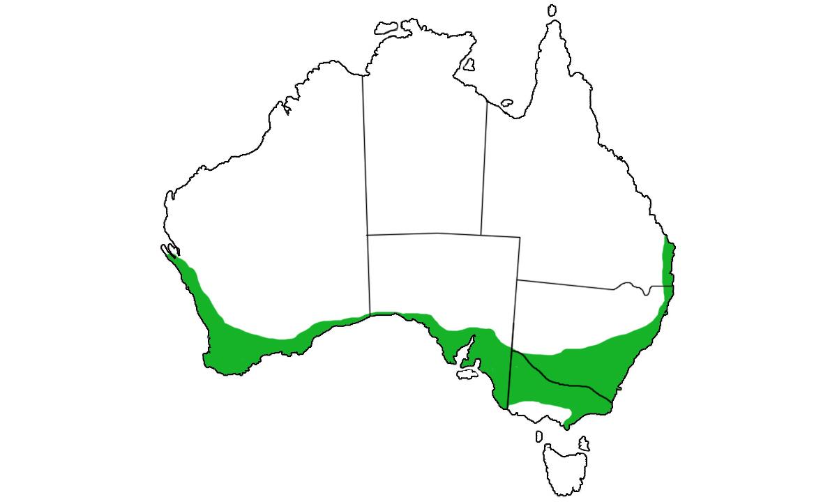 Pygopus-lepidopodus-range.jpg