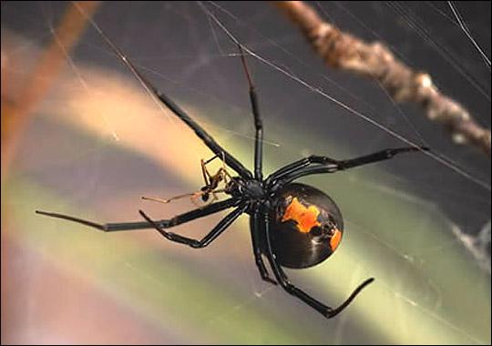 spider_zoom2.jpg