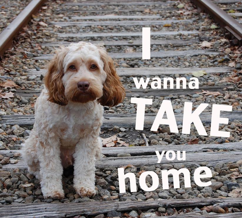 Take you home02.jpg