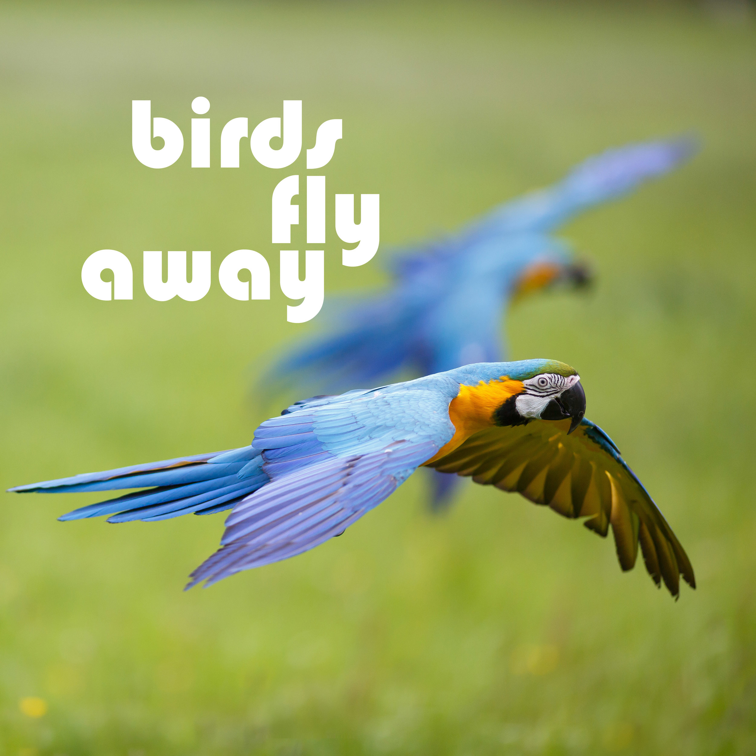 Birds Fly Away.jpg