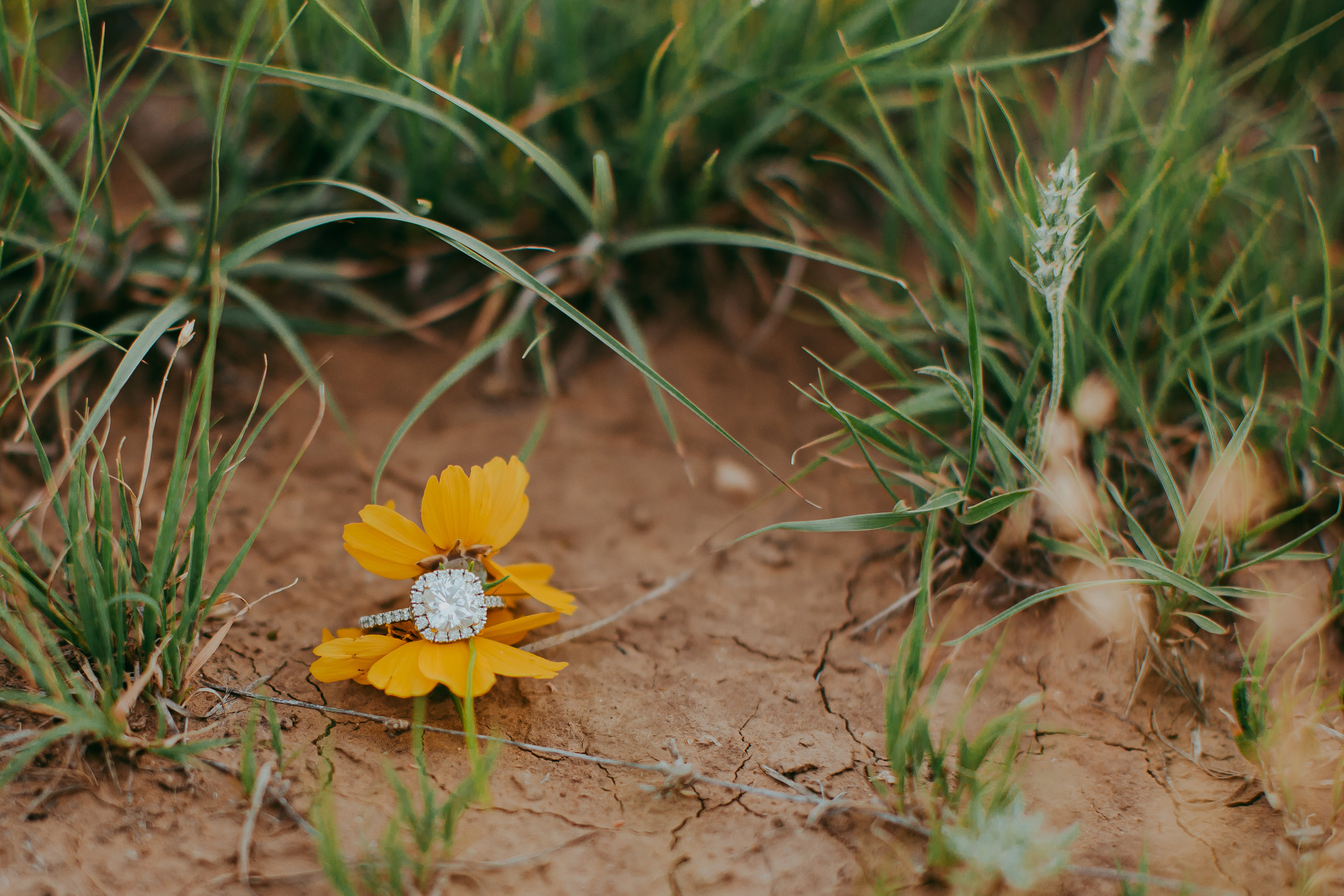 Engagement ring photograph between two yellow flowers on the ground focusing on the diamond and beauty of the ring #engagementphotos #riverfalls #engaged #personality #amarillotexas #engagementphotographer #lifestylephotos #amarillophotographer #locationchoice #texasengagementphotos #engagment #tealawardphotography #wildliferefuge