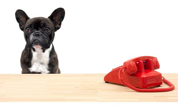 phone-dog.jpg
