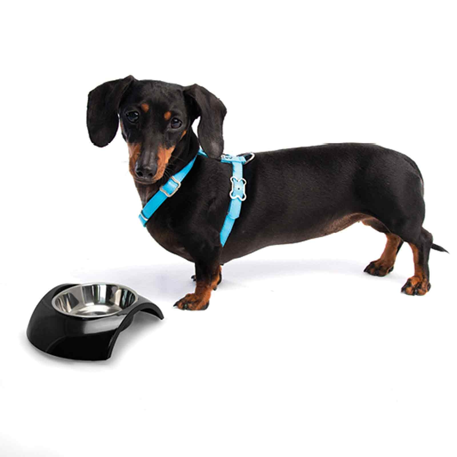 rogz-luna-bowl-and-h-harness-with-dog_1.jpg