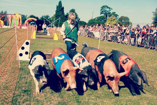pig-races.jpg