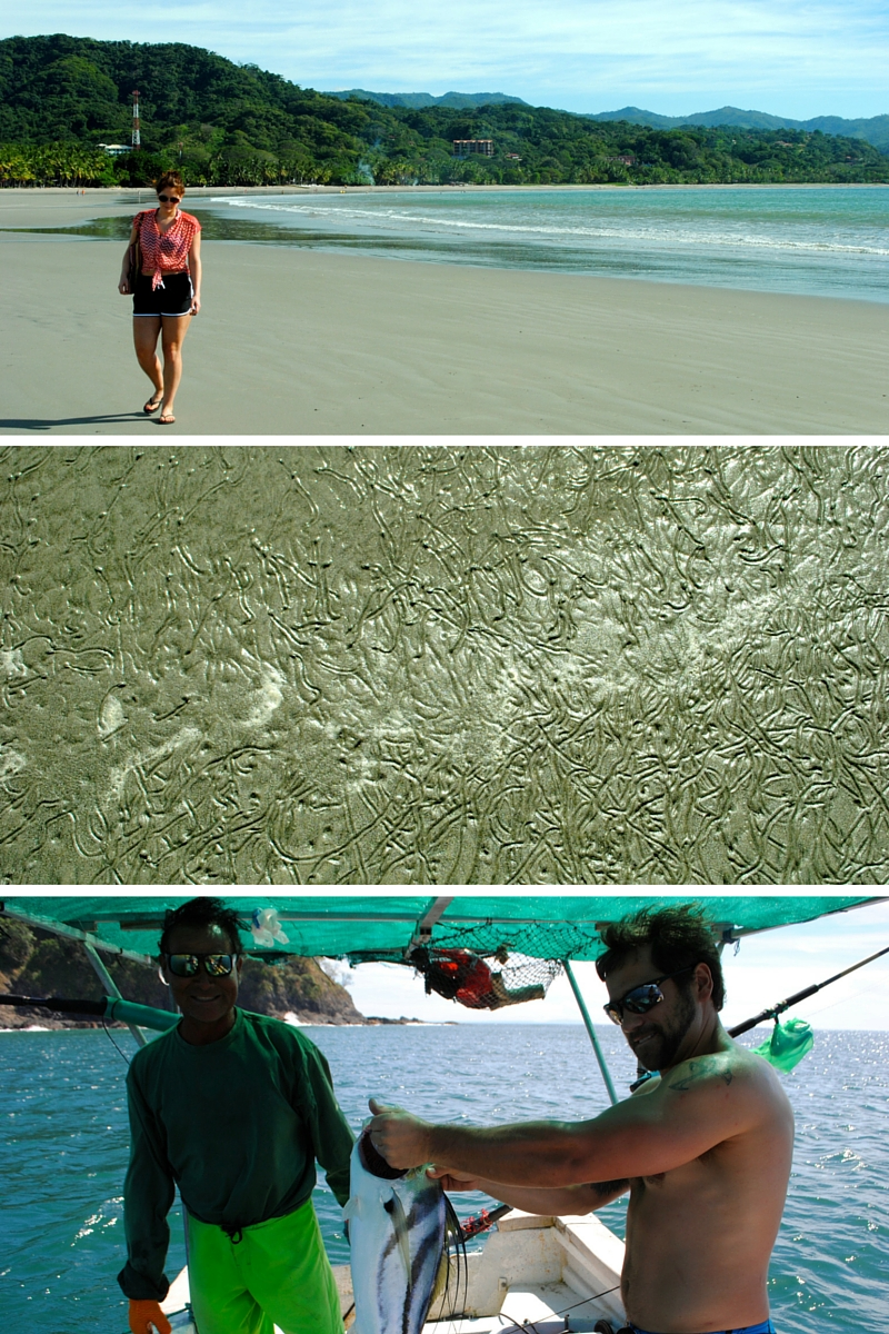 Early morning walks to the beach, busy sand snails and catching a tasty rooster fish!