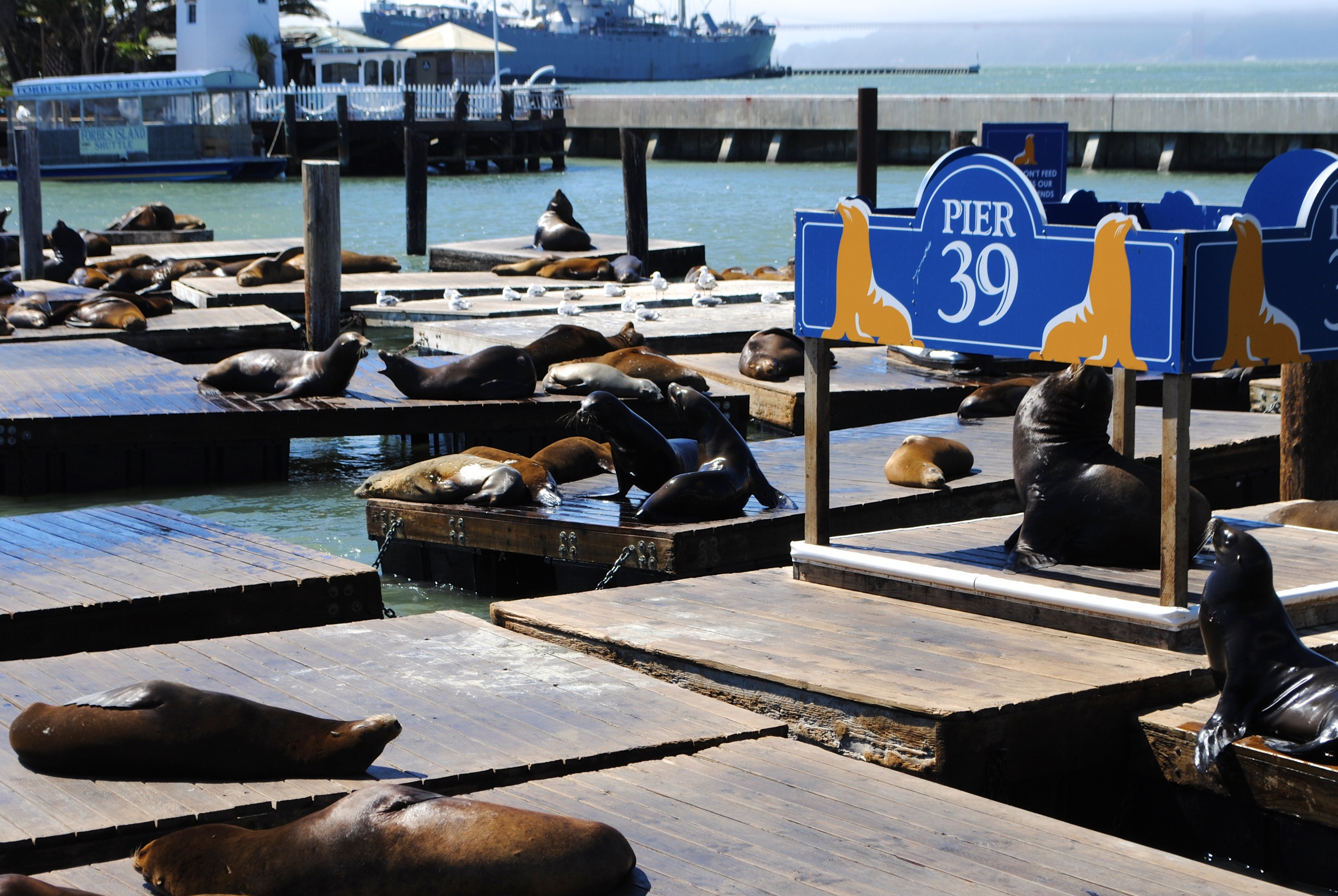 Watching the seals at Pier 39 is a riot. There is truly hours of entertainment here.