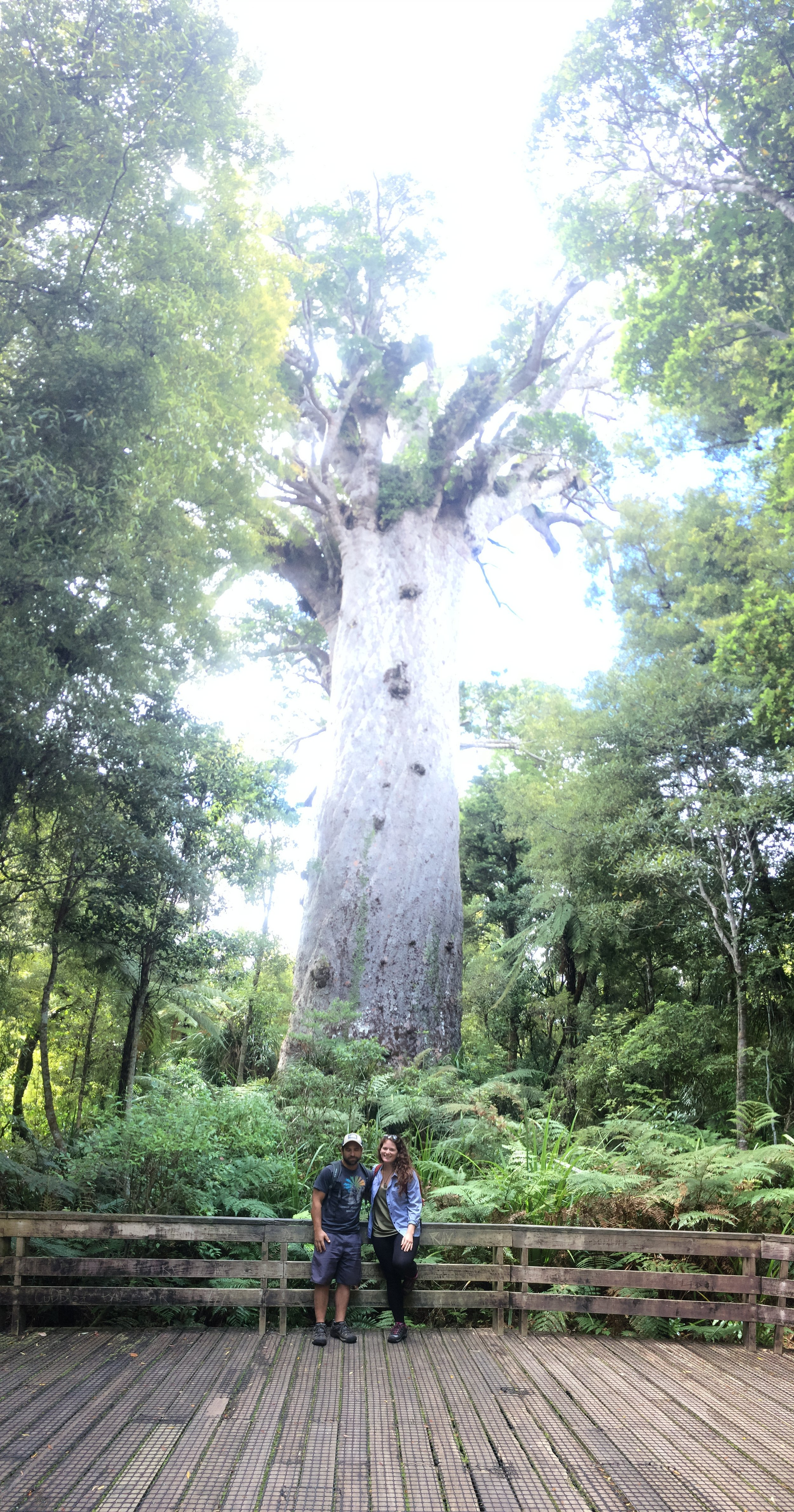 Visiting with Tane Mahuta (51 meters high, 13.8 meter trunk girth)- this is one of the oldest Kauri trees!They built a beautiful boardwalk to it and then discovered there was an even older one much less accessible.