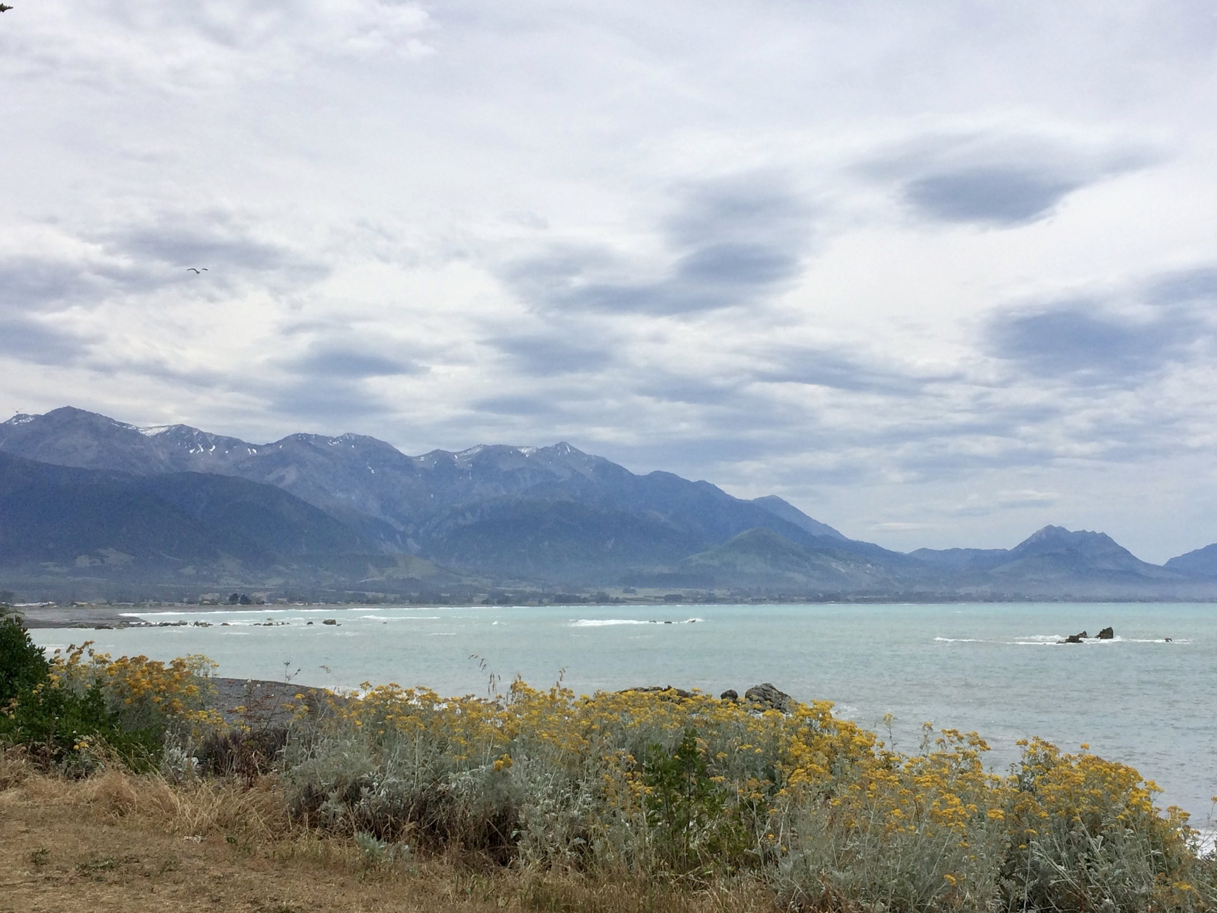 The mist and clouds cleared just enough to glimpse the mountains. Kaikoura; where the mountains meet the ocean.