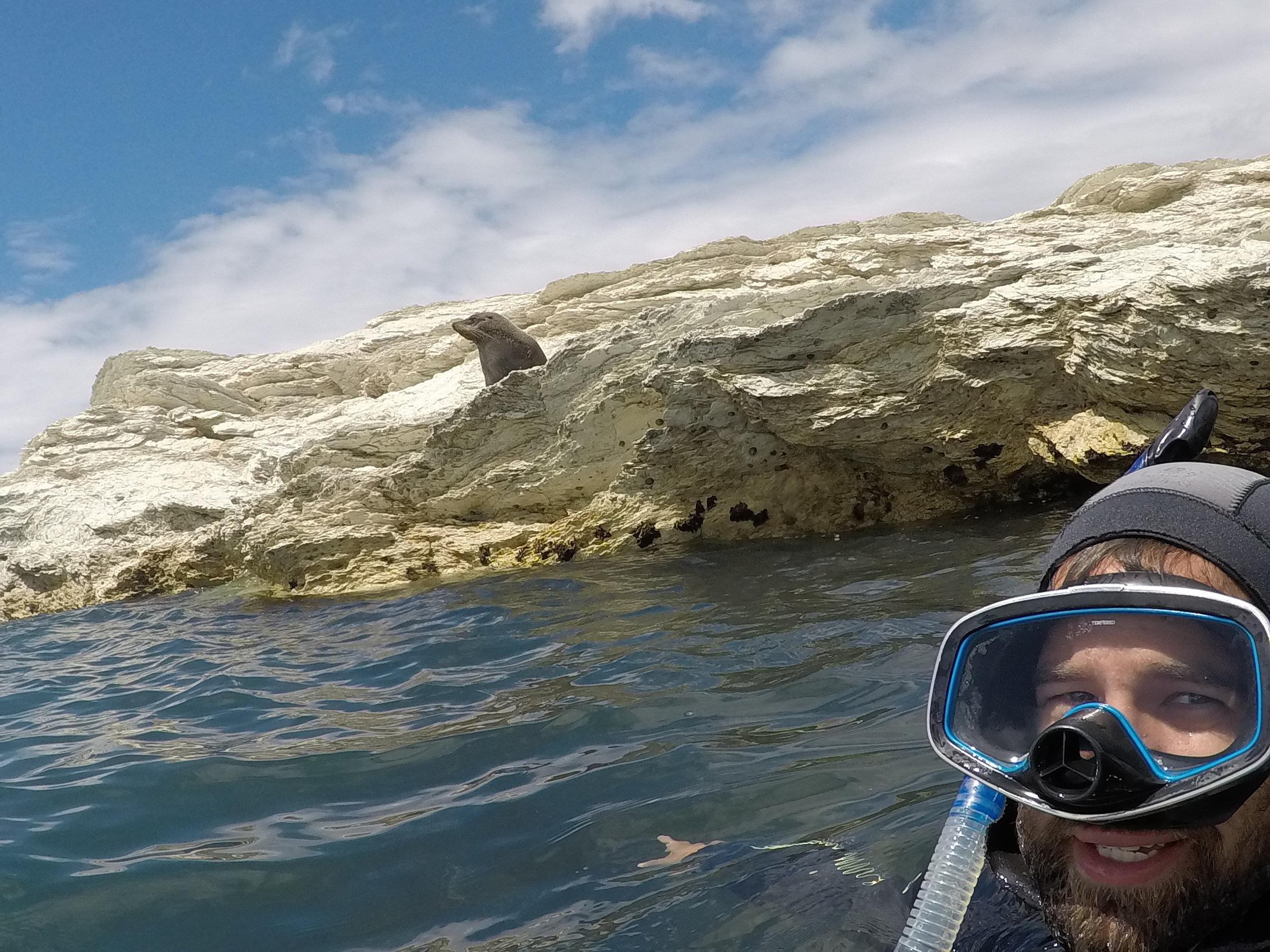 Sort of swimming with seals in Kaikoura.