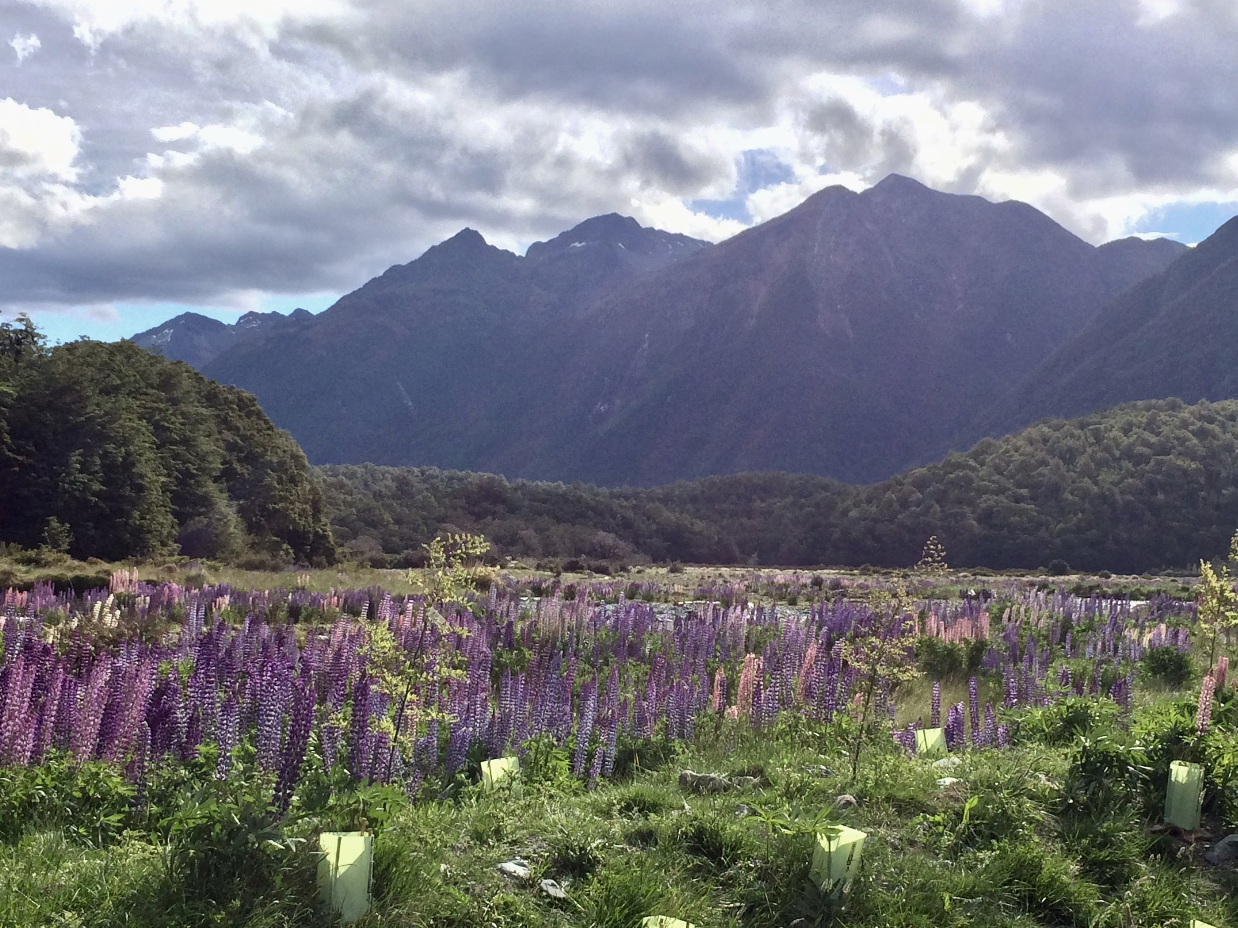 Hello to the most beautiful campsite ever! Cascade Site on route to Milford Sound.