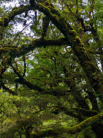 Inside the Rarakau Forrest