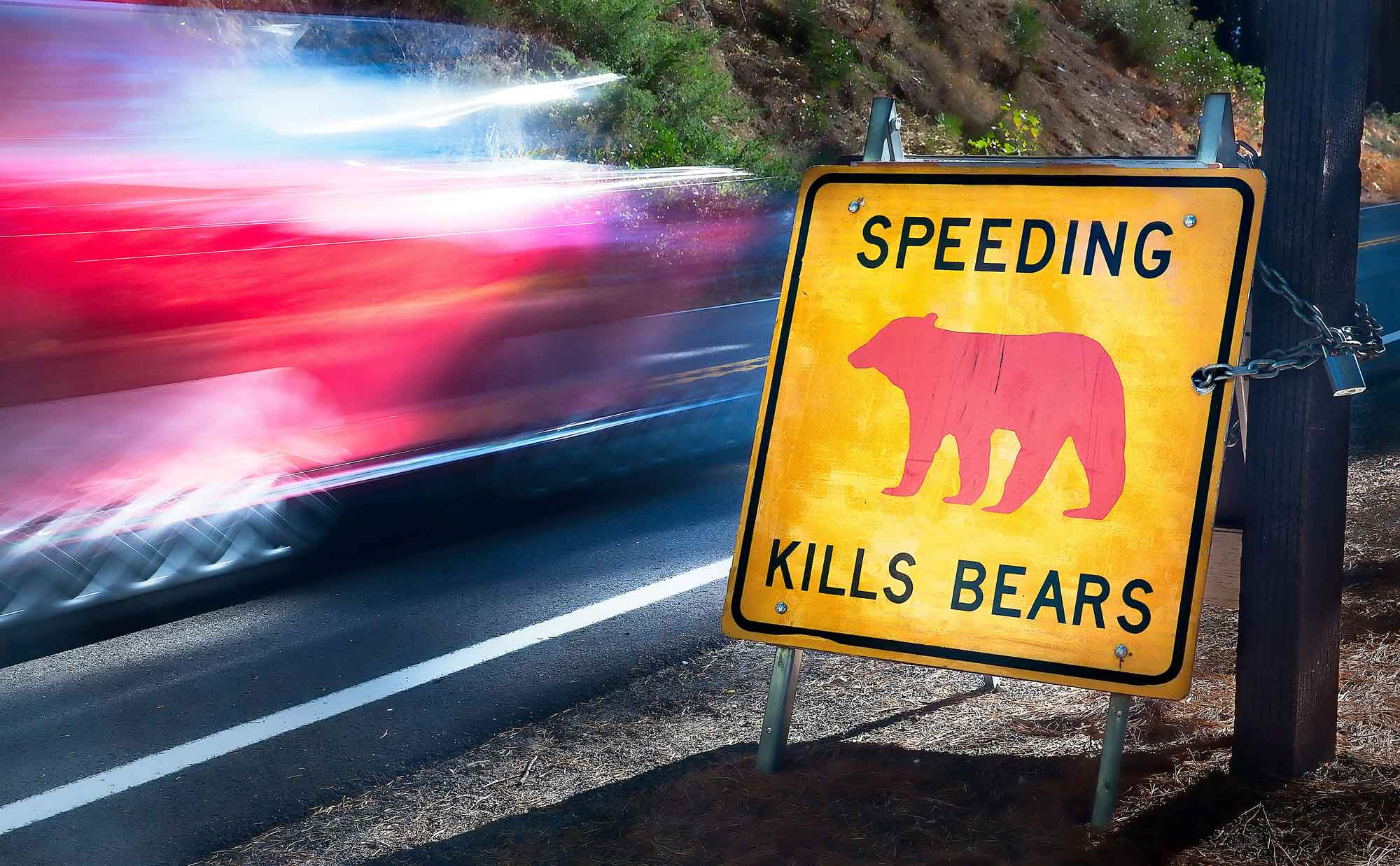 Follett_speeding_kills_bears_1LR.jpg